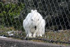 IMG_8239 (u.wittwer) Tags: park zoo schweiz switzerland tiere suisse tierpark heimat arth naturpark goldau widi