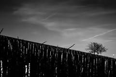 (Elena Zanon) Tags: blackandwhite nature canon germany bnw blackandwhitephotography canonitalia bnwphotography canon600d eos600d canonrebelt3i canonofficial