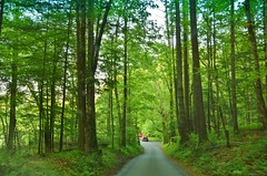 Cades Cove traffric (stevelamb007) Tags: park trees green nature forest nikon tennessee valley smokymountains cadescove windingroad nikkor18200mm stevelamb d7200