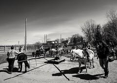 Old fashioned merry-go-round (vinnie saxon) Tags: park people blackandwhite horse monochrome nikon shadows ride outdoor merrygoround nikoniste