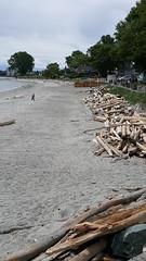 Calm Before  The Storm (wjis21) Tags: willows willowsbeach oakbay oakbayteaparty tea teaparty galaxynote5 smartphone celebration beach