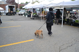 A pup on the prowl at Waltham Farmers' Market.