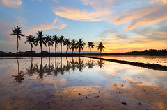 Band Of Brothers Part III (nadzli.azlan7) Tags: blue trees sunset sky cloud reflection tree art nature colors clouds landscape landscapes amazing artistic sunsets bluesky reflect malaysia penang mothernature waterscapes naturelovers amazingsunset burningclouds artofnature
