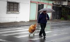 Compras (Lukas Osses Codelia) Tags: lluvia dia gas amarillo ojos silla paso caminar paraguas frio tarde abuelos abuelo canas balon seor miradas cebrea