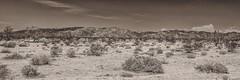 Joshua Tree National Park (Oliver Leveritt) Tags: california mountains monochrome sepia desert platinum joshuatreenationalpark afsnikkor2470mmf28ged oliverleverittphotography nikond610