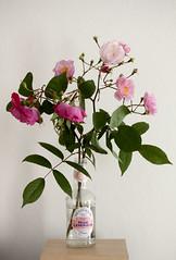 Rose Lemonade (Lu7h13n) Tags: pink stilllife white green rose canon lemonade indoors efs60mmf28 eos500d