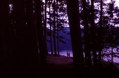 Pog Lake (Blia100) Tags: lake film analog prime grain slide transparency algonquin miranda provia e6 reversal sensorex filmphotography poglake