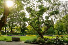 Botanischer Garten (GerWi) Tags: trees sky sun outdoor pflanzen himmel bonsai sonne bume garten ways rasen wege grnflche anlage botanischergarten rasenanlage