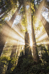 Mystic Forest Workshop with Michael Frye (PrairieIce60) Tags: california fog canon landscape coastal redwoods sunrays ef24105mmf4 5dsr