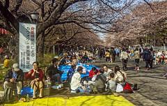 hanami in Ueno (philippe*) Tags: people japan tokyo sakura hanami