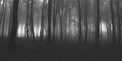 (Botond Pataki) Tags: trees bw white mist black fog dark scary gray grain spooky
