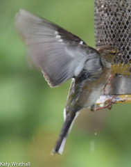 FacePlant (Katy Wrathall) Tags: 2016 chaffinch eastriding eastyorkshire england june summer birds feeders garden 30dayswild