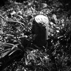 Remembered (Trojan_Llama) Tags: family bw white black film cemetery woodland mediumformat dad remember natural father agfa isolette shanghaigp3