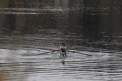 Aviron, 2 en pointe sans barreur (alex73s https://www.facebook.com/CaptureOfAlex?pnr) Tags: 2 lake france sport lago boat europe lac row deux rowing pointe savoie bateau sans rower aiguebelette aviron daiguebelette barreur
