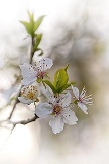 Simply Spring mk3