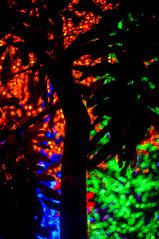 (kuuan) Tags: leica tree lights minolta malaysia mf f2 kualalumpur 40mm 240 rokkor icity minoltamrokkor mrokkorf240mm f240mm minoltamrokkorf240mm