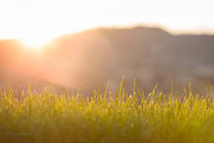 The First Rays (Levan Verdzeuli) Tags: sun sunrise firstrays