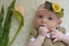 s p r i ng . t u l i p (dear emma rae) Tags: baby spring tulips springflowers babybooties 3monthsold babydress 11weeksold emmarae handmadebaby knitbabydress may2016 dearemmarae