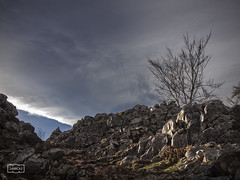 Sin ttulo. Se admiten propuestas/ No title. Your proposals are welcome (Jose Antonio. 62) Tags: trees espaa beautiful clouds photography spain colours arboles asturias nubes picosdeeuropa