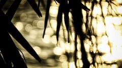 Submediterranean Lake (liqube) Tags: sun lake blur mountains water sunshine palms golden evening highlights depthoffield mountainrange