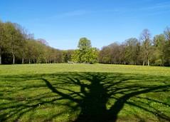 Baumschatten (jan.boettcher) Tags: park shadow tree schatten baum