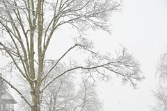 snow tree house (fdfotografie) Tags: schnee winter flora outdoor pflanze himmel haus struktur grn tageslicht dslr ste baum muster zweige ausschnitt weis textur farbfoto verzweigungen querformat lichtstimmung d7100