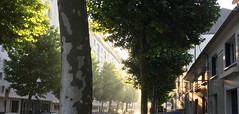 003. (Agathe OLDH.) Tags: street morning trees light sun france green cars leaves car buildings soleil leaf lumire parking vert voiture arbres rue nantes feuilles voitures nofilter matin iphone immeubles iphone6