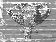 The Charging Elephant (Steve Taylor (Photography)) Tags: wood newzealand blackandwhite streetart elephant art window monochrome animal wall digital grey graffiti stencil mural nelson monotone nz southisland outline weatherboard tusk
