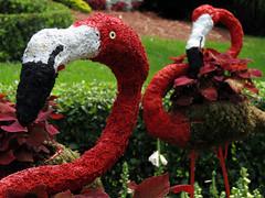 Flock of Florida Flamingos Topiary (meeko_) Tags: africa food festival gardens tampa topiary wine florida flamingo flock flamingos themepark buschgardens busch foodandwinefestival buschgardenstampa birdgardens buschgardensafrica buschgardenstampabay flockoffloridaflamingos