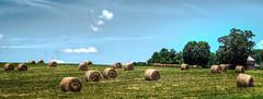 Round Bales, Pittsylvania County, VA (Bob G. Bell) Tags: usa virginia farm gretna fujifilm hay haybales roundbales xt1 bobbell pittsylvania sansogm nongmoagriculture stopgylphosatepoisoning saveorganicfarmers supportsmallerfarms