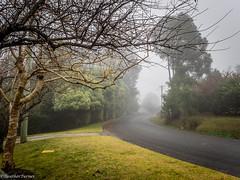 weather-6180084 (Denisedancer) Tags: mist weather