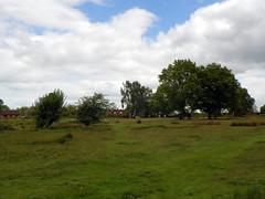 GOC The Pelhams 078: Patmore Heath Nature Reserve, Albury (Peter O'Connor aka anemoneprojectors) Tags: england plant tree field landscape kodak outdoor heath scrub hertfordshire albury 2016 patmoreheath scrubland goc gayoutdoorclub z981 kodakeasysharez981 gochertfordshire hertfordshiregoc gocthepelhams patmoreheathnaturereserve