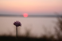 memory (mariawauer) Tags: travel sunset flower nature canon germany landscape photography adventure explore tamron lausitz eos500d geierswaldersee lausitzerseenland