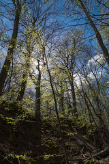 Durchscheinend / shining through (photobeyDE) Tags: trees weather project de deutschland urlaub suny rgen sonnig bume mecklenburgvorpommern sassnitz