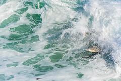 ArchitectGJA-5289.jpg (ArchitectGJA) Tags: california santacruz beach coast waves streetphotography montereybay surfing cliffs steamerlane oneill hurley wetsuit ripcurl lighthousepoint lighthousefield californiababy xcel marineanimals surfingsteamerlane brydenm