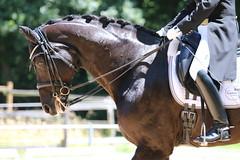 IMG_4792 (dreiwn) Tags: horse pony horseshow pferde pferd equestrian horseback reiten horseriding dressage reitturnier dressur reitsport dressyr dressuur ridingclub ridingarena pferdesport reitplatz reitverein dressurreiten dressurpferd dressurprfung tamronsp70200f28divcusd jugentturnier