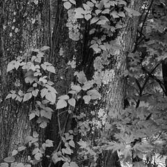 DSC_0023 (rlnv) Tags: blackandwhite newjersey princeton delawareandraritancanalstatepark 1855mmf3556gii nikond40x newjerseystateparks