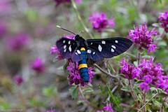 IMG_0817-269 (Martin1104) Tags: fotografie natuur bergen landschap vlinders yagodina snp bulgarije natuurfotografie natuurreis