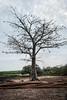 F3926 ~ The sacred tree (Teresa Teixeira) Tags: poilão árvoresagrada sacredtree guinébissau uno bijagós mundoasorrir mundoasorrirongd voluntariado teresateixeira