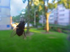 (Jean-Luc Lopoldi) Tags: fly bokeh lawn block pane pelouse mouche immeuble vitre