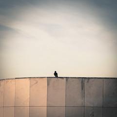 Bird People (auclairde) Tags: street streetphotography oiseau share 2015 graphique sharef auclairde