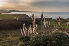 Backlit (madrones) Tags: ocean california ca morning usa northerncalifornia us unitedstatesofamerica highway1 bayarea northamerica halfmoonbay pescadero landscapephotography seascapephotography