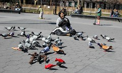 Mother Pigeon and her flock (J Blough) Tags: nyc manhattan pigeon washingtonsquarepark motherpigeon