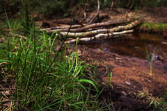 By The Stream (Morgan Masters photography) Tags: wood wild england colour nature water colors grass canon woodland landscape photography countryside woods stream colorfull wildlife country logs waterflow elstead colourfull naturalengland watersmash