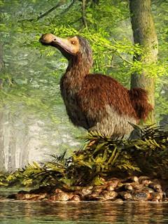 The Happy Dodo