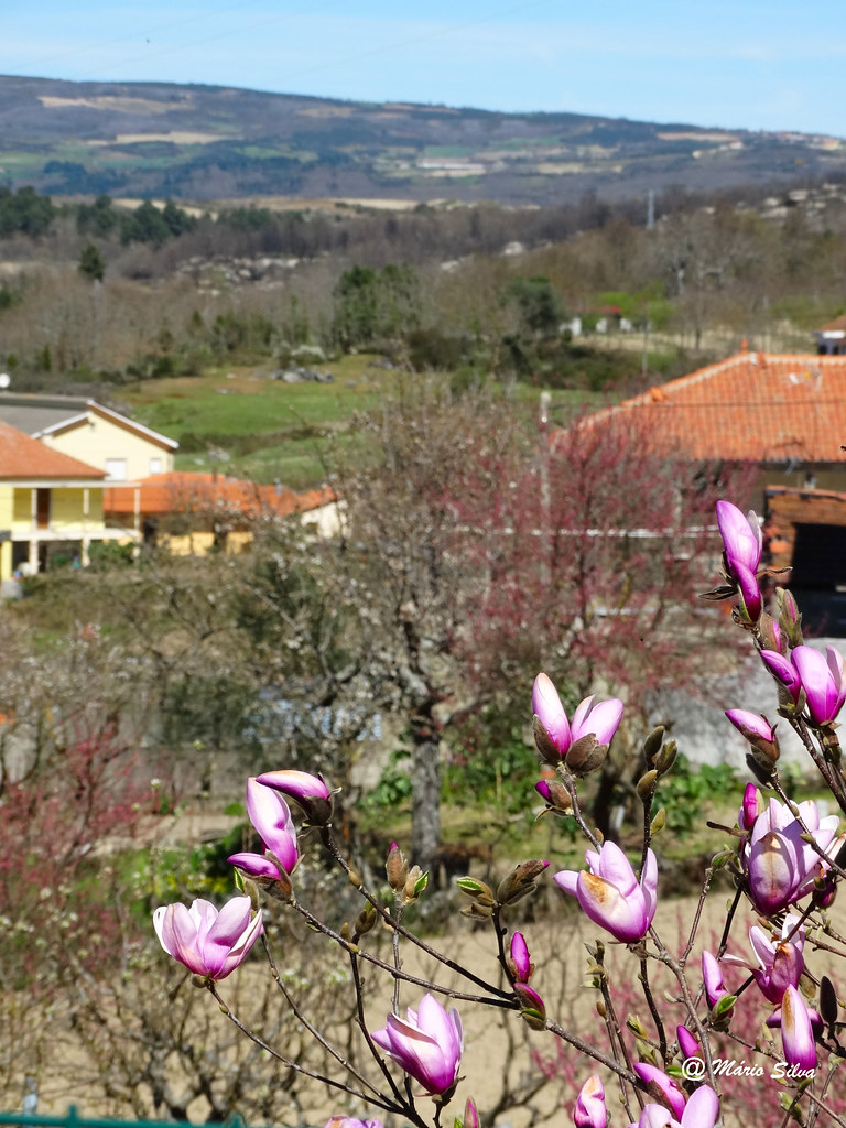 Águas Frias (Chaves) - ... espreitando a Aldeia por entre as flores ...