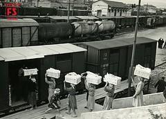 Nella stazione di Gallico le arance vengono caricate sui carri FS, Reggio Calabria (1953) (Ferrovie dello Stato Italiane) Tags: italia treno fs binari treni ferrovie fondazione