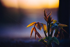 Lines (Cody Schroeder) Tags: macro spider washington leaf spokane zoom bokeh web sony details vivitar a7 mirrorless 75205mm