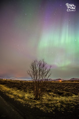 Northern lights (ShengRan) Tags: landscape lights iceland nikon aurora northern d600