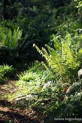 (tatianatorgonskaya) Tags: wood tree nature forest landscape kind scaffold balkans montenegro    crnagora hercegnovi       balkanstravel   opstinahercegnovi       savinskadubrava